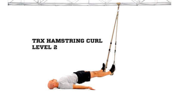 trx hamstring curl exercise