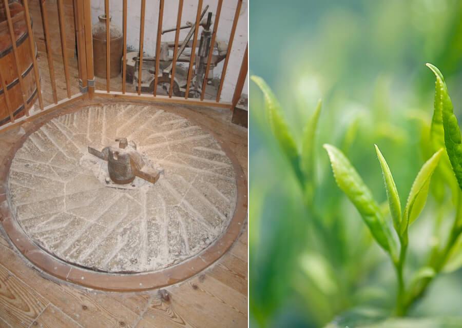 matcha green tea powder manufacturers